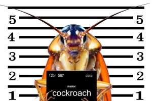 Read more about the article How to get rid of COCKROACHES [eco]