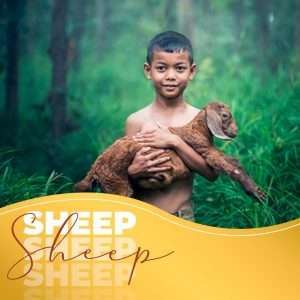 sheep are cute and kids love them