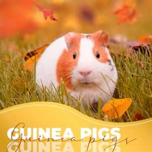 guinea pigs are lovely and easy to take care