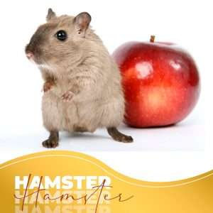 hamsters are great for kids